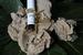 Olieparfum Magnolia OPM1 10 ml