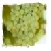 Druivenpit olie Druiv2 500 ml